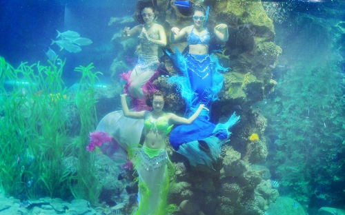 Những màn trình diễn độc đáo ở thủy cung Vinpearlland.