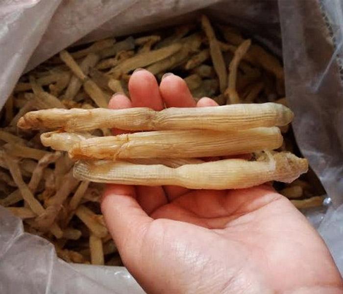 Sá sùng Nha Trang có kích thước trung bình khoảng 5 cm - 8 cm, giống như con giun vừa ngắn vừa béo
