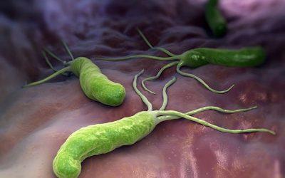 Vi khuẩn Hp gây viêm loét dạ dày thường lây qua những đường nào?